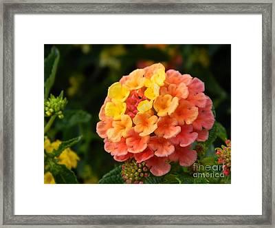 Sunrise Inspired Flower Framed Print by Sara  Mayer