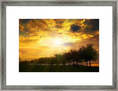 Sunrise Over Tree Line Framed Print by Amanda Elwell