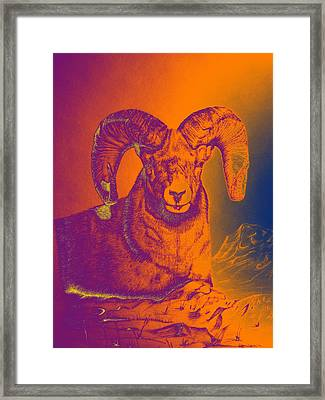Sunrise Ram Framed Print by Mayhem Mediums