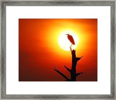 Sunrise Sentinel Framed Print