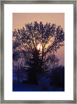 Sunrise Through A Tree In Winter Framed Print by Richard Wear