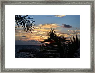 Sunrise Through Palms Framed Print by Ken  Collette