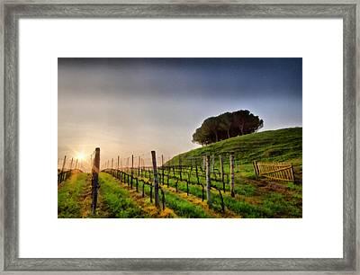 Sunrise Through The Vineyards Framed Print by Matteo Zonta