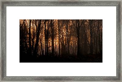 Sunrise Through Trees Framed Print by Shawn Zimmerman