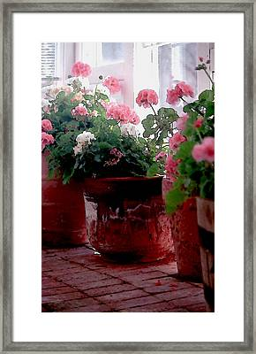 Sunroom With Geraniums Framed Print by Elaine Frink