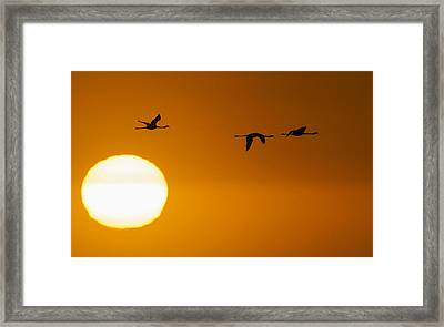 Sunset 3 Framed Print