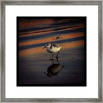 Sunset And Bird Reflection Framed Print