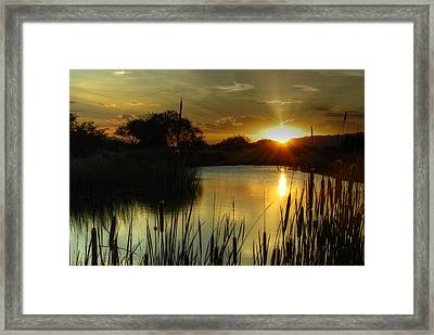 Sunset And Cattails Framed Print by Tam Ryan