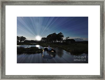 Framed Print featuring the photograph Sunset Assateague Island With Wild Horse by Dan Friend