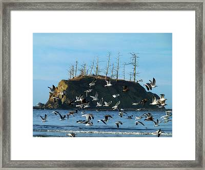 Framed Print featuring the photograph Sunset Bay Scape And Gulls by Cindy Wright