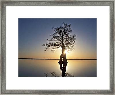 Sunset Behind A Tree Framed Print
