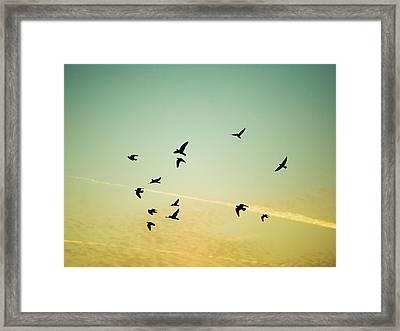 Sunset Birds Framed Print by Sarah Palmer