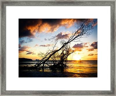 Sunset Drift Wood 2 Framed Print
