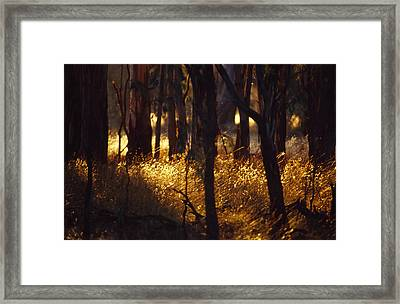 Sunset Falls Over Seeding Grasses Framed Print by Jason Edwards