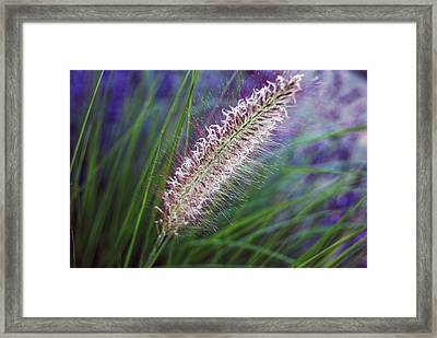 Sunset Garden Framed Print