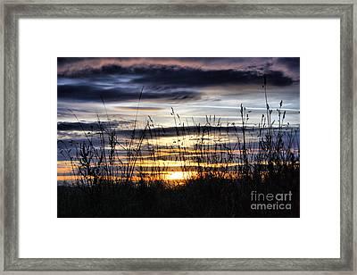 Sunset Grasses Framed Print by Sandra Cockayne
