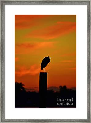 Sunset Heron Framed Print by Lynda Dawson-Youngclaus