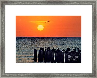 Framed Print featuring the photograph Sunset In Florida by Lydia Holly