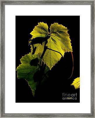 Sunset In My Garden Framed Print by Eena Bo