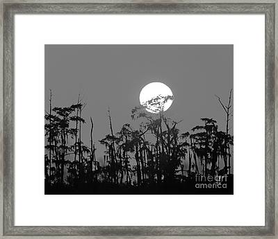Framed Print featuring the photograph Sunset In Swamp by Luana K Perez
