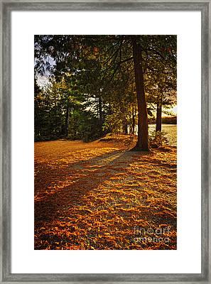 Sunset In Woods At Lake Shore Framed Print by Elena Elisseeva
