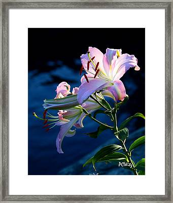 Framed Print featuring the photograph Sunset Lily by Patrick Witz