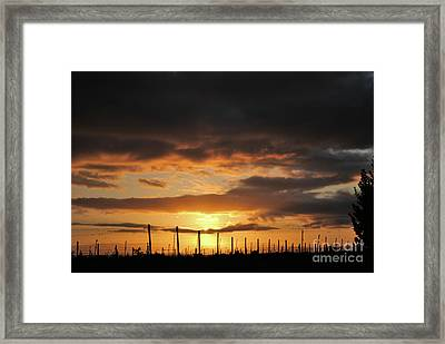 Sunset On The Vineyards Framed Print