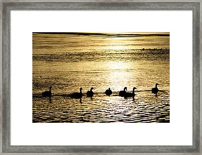 Sunset Over Canada Geese Framed Print