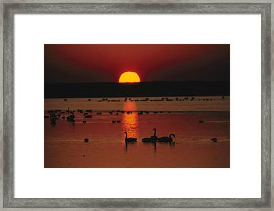 Sunset Over Chincoteague Island Marsh Framed Print by Medford Taylor