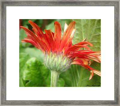 Sunset Petals Framed Print
