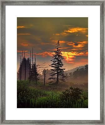 Sunset Pine Framed Print