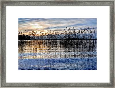 Sunset Reed Framed Print by Roman Rodionov