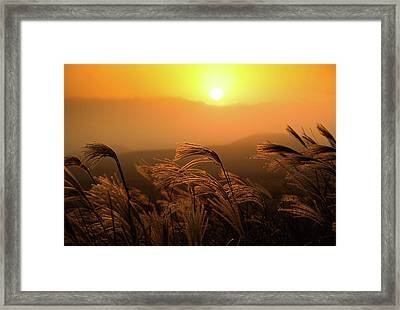 Sunset, Reeds And Wind Framed Print by Douglas MacDonald