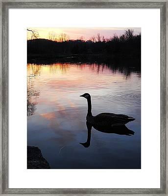 Sunset Serenity Framed Print by Shelley Patten-Forster
