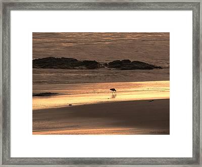 Sunset Shimmer Beach Framed Print by Debra     Vatalaro