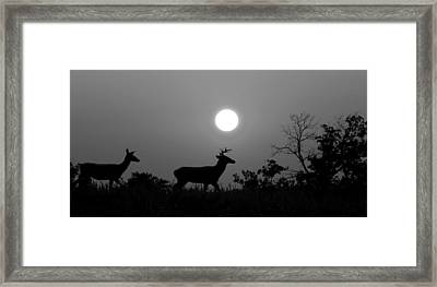 Sunset Silhouette Bw Framed Print by David Dehner