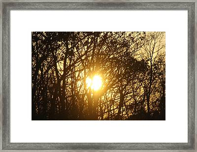 Sunset Silhouettes Framed Print