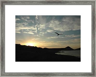 Sunset Soaring Framed Print by Jonathan Schreiber
