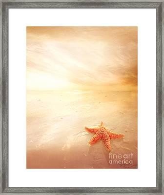 Sunset Star Fish Framed Print by Lee-Anne Rafferty-Evans