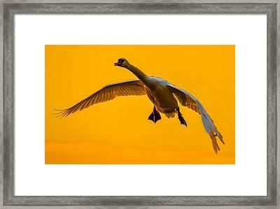 Sunset Superman Framed Print by Brian Stevens
