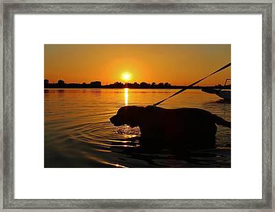 Sunset Swim Framed Print by Alexander Spahn
