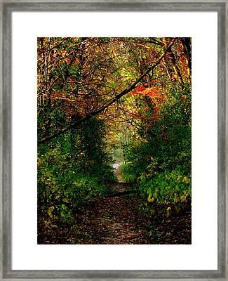 Sunset Through Trees Framed Print by Bridget Johnson