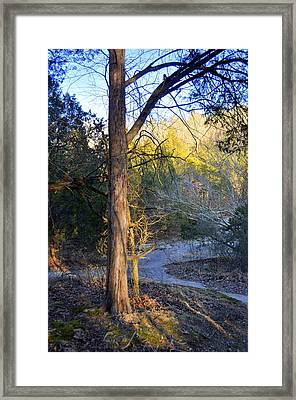 Sunset Tree Framed Print by Marty Koch