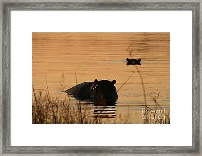 Sunset Viewer Framed Print by Carol Wright