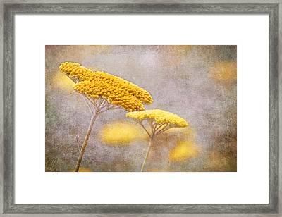 Sunshine Achillea Framed Print