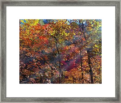 Sunshine In The Trees Framed Print by Brian Lambert