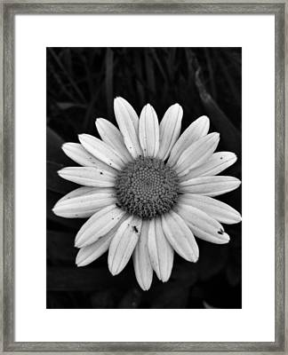Framed Print featuring the photograph Sunshine by Janice Spivey