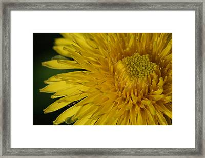 Framed Print featuring the photograph Sunshine Weed by Peg Toliver