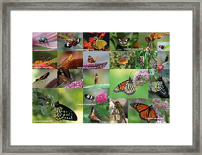Sunshining Love Bugs Framed Print by Juergen Roth