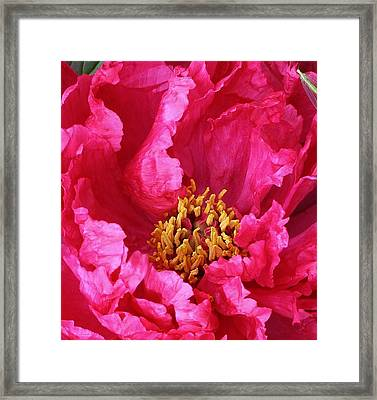 Suprise Within Framed Print by Bruce Bley